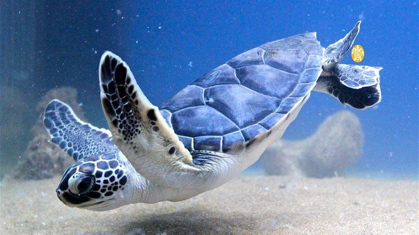 Marine Turtles. What Are They Good For? Absolutely Everything