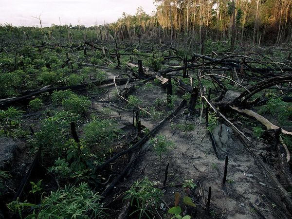 Rousseff, an economist and former Marxist guerrilla who became Brazil's first woman president Brazil pledged to curb deforestation as part of climate pledge  Source: NationalGeographic