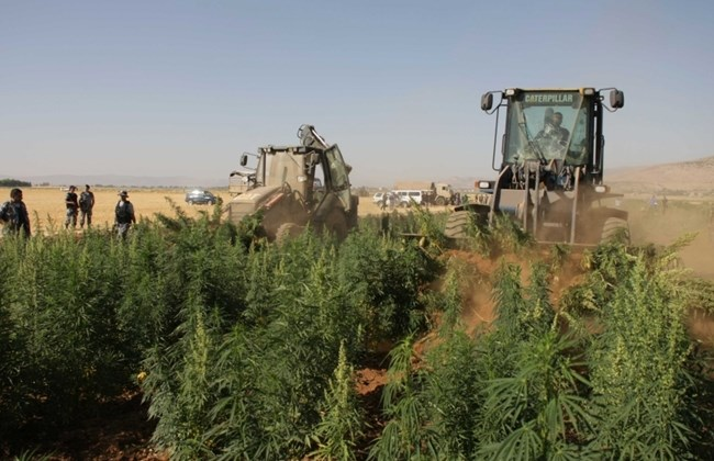 Army and ISF tractors annualy destroy cannabis fields. | Source: TheDailyStar/NidalSolh
